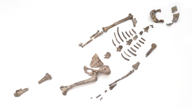 مجموعه استخوانهای لوسی