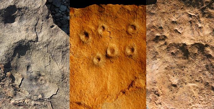 بقایای فسیل های نخستین موجودات در سایت زاریس در نامیبیا- توضیحات بیشتر