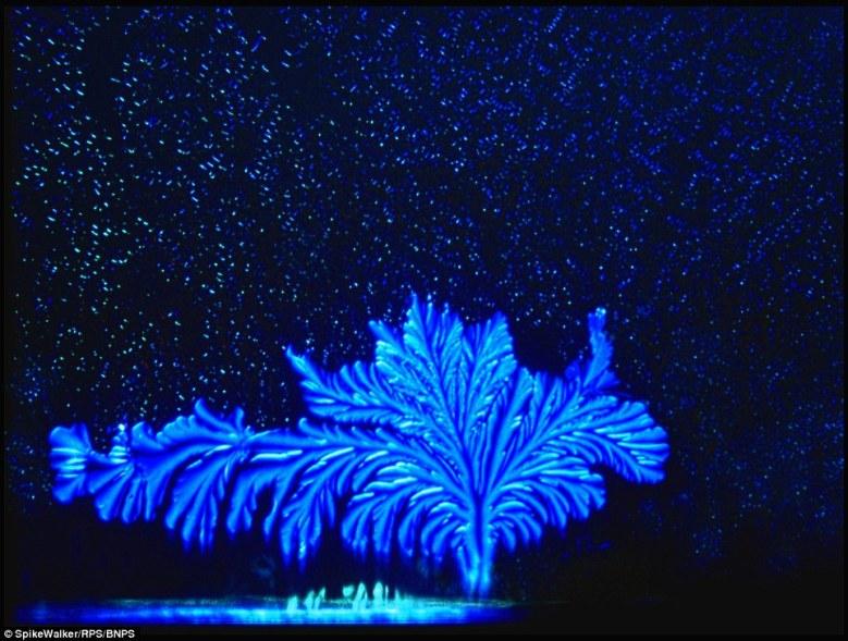 این تصویر واقعا شبیه به یک درخت جادویی در زیر یک آسمان پر از ستاره است اما در حقیقت تصویر میکروسکوپی از یک دانه شکر در حال رشد در یک محلول ژلاتین است.