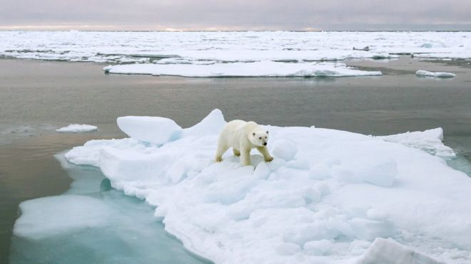 _91217238_c0207070-polar_bear_standing_on_a_ice_floe-spl