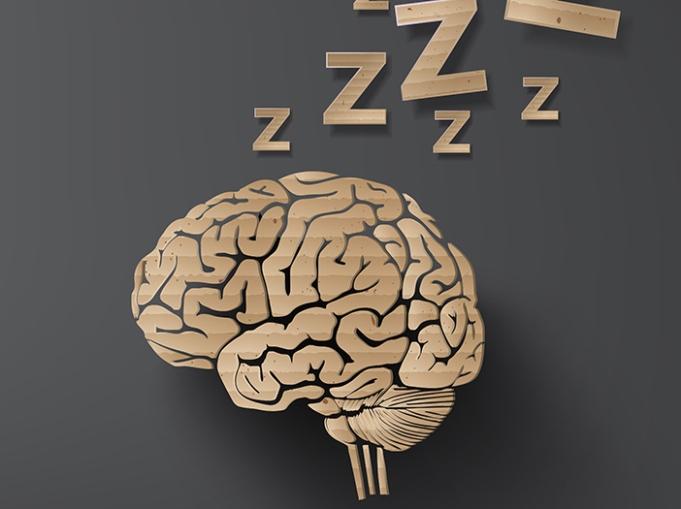 brain-sleep