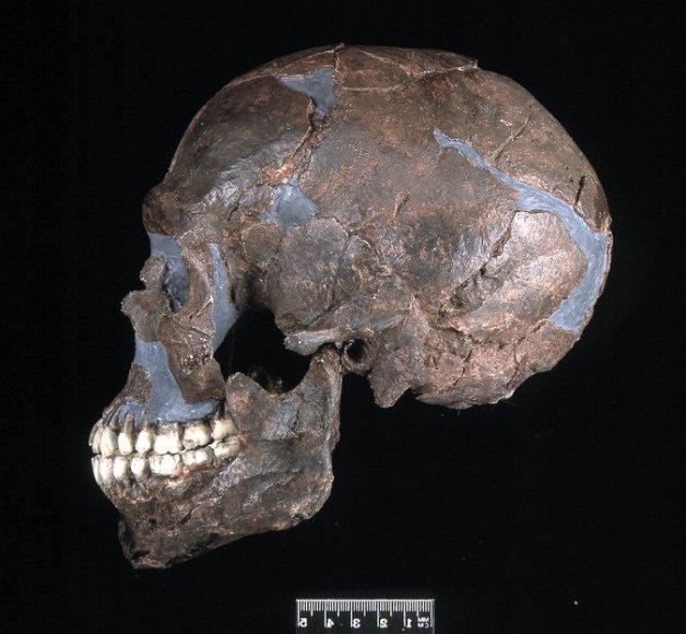 ماکت جمجمه انسان کشف شده در فلسطین که در حدود 90000 سال قدمت دارد.