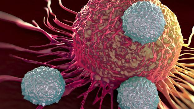 حمله سلولهای تی سیستم ایمنی به سلول سرطانی