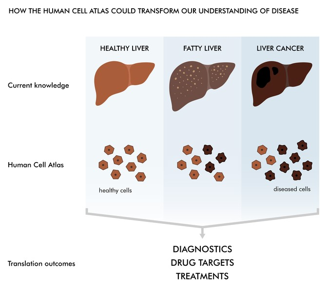hcapress_03_healthydisease_final