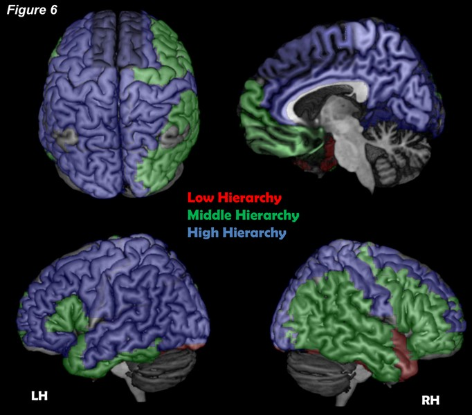 تحقیقات جدید منتشر شده در مجله فیزیک بر آن است تا لایه های ساختاری قشر مغز را به شاخه های مختلف تجزیه نماید و شناسایی هسته ی شبکه را مقدور سازد. احتمال می رود خودآگاهی ما از این شبکه نشأت گرفته باشد.