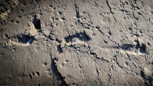 رد پاها در خاکستر آتشفشان ایجاد شده است
