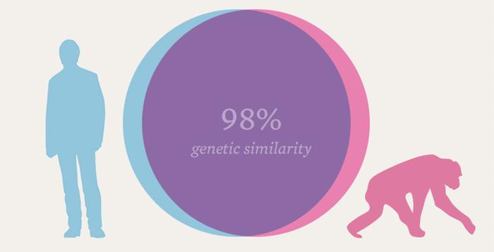 98 درصد ژنوم انسان و شامپانزه به هم شباهت دارد. انسان ها و شامپانزه ها دارای جد مشترکی بودند که در حدود هشت میلیون سال پیش زندگی می کرد.
