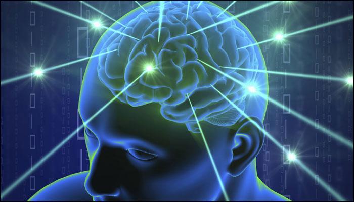 559669-brain2