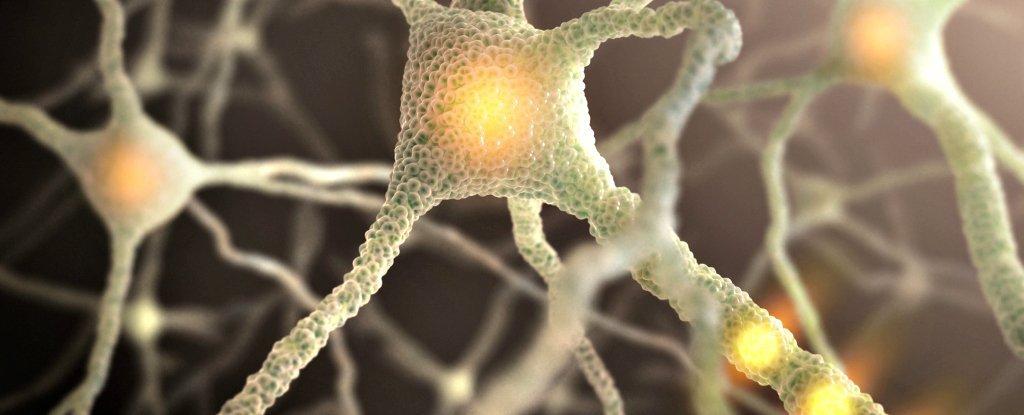 nervecells_web_1024