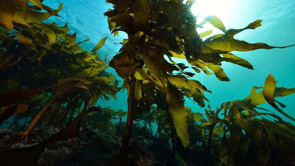 آپارات مغز جدید آیا جلبک های دریایی به اجداد اولیه ما کمک کردند؟   وب سایت ...