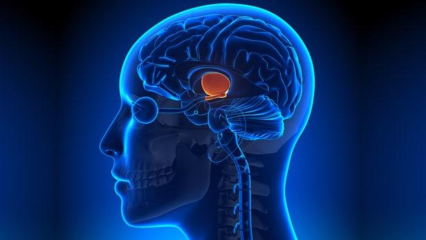 آپارات مغز جدید احتمال وجود چشمه حیات در مغز انسان | وب سایت علمی بیگ بنگ
