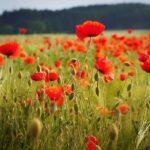 گیاهان گلدار چگونه جهان را فتح کردند؟