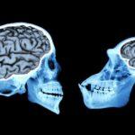 اندازۀ مغز اجداد انسانی طی سه میلیون سال فرگشت یافت