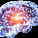 رشد مغز در همه سنین ادامه دارد