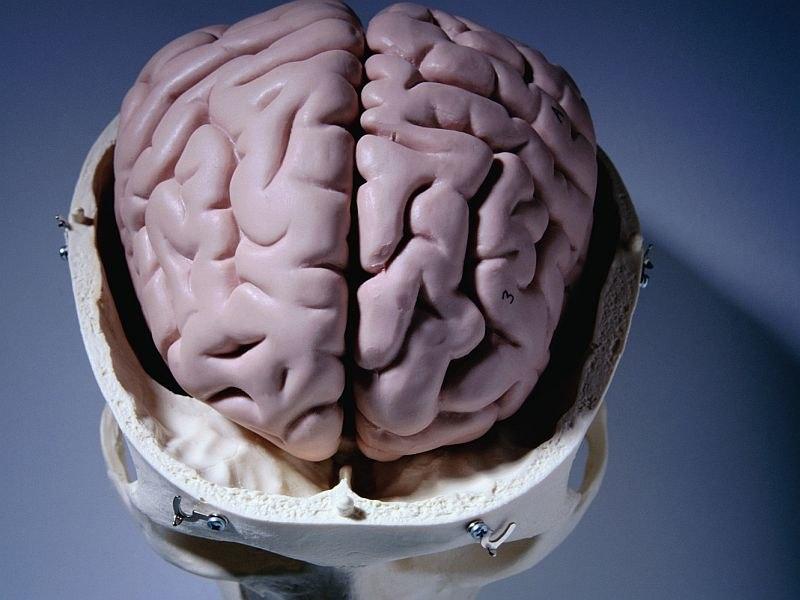 نتیجه تصویری برای مغز وهوش