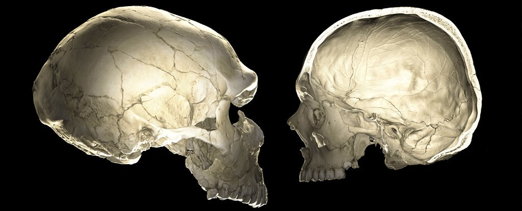 human neanderthal skull genes