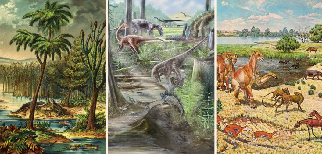 image e Phanerozoic Animal Diversity