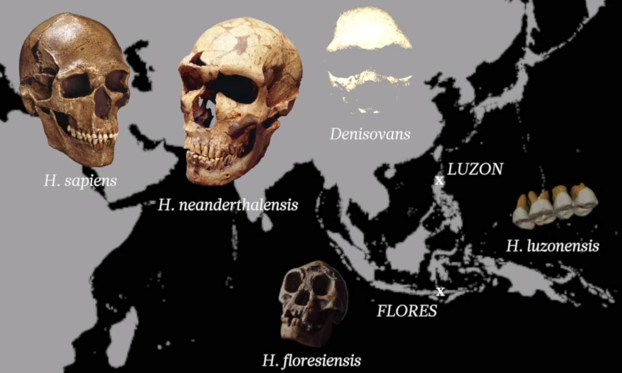 Map of early hominins including h luzonensis