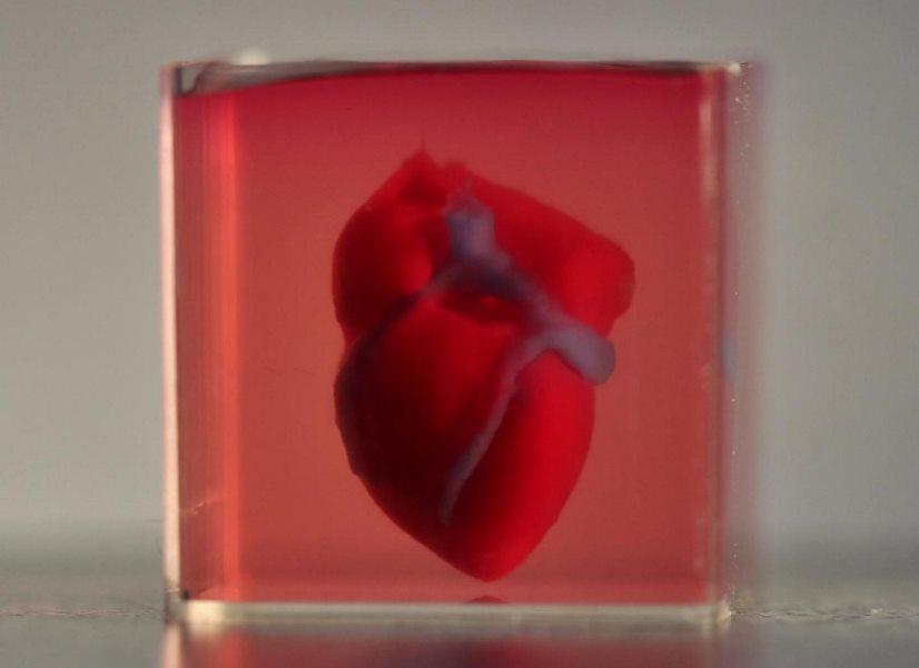 image e D Printed Heart