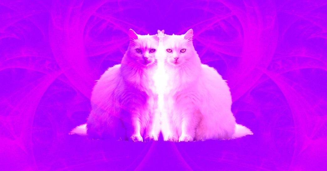 predict quantum jumps schrodingers cat x