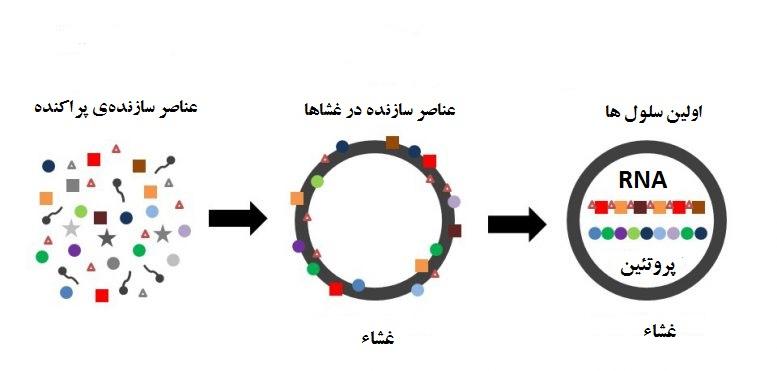 Cell Origin Model x