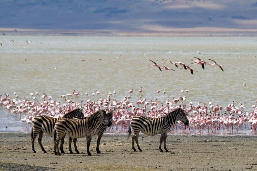 Lake Magadi scaled