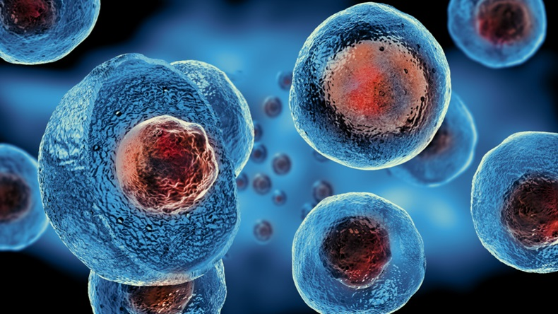 embryonic stem cells under microscope
