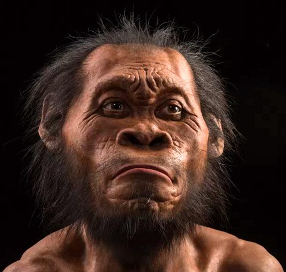 image Homo naledi