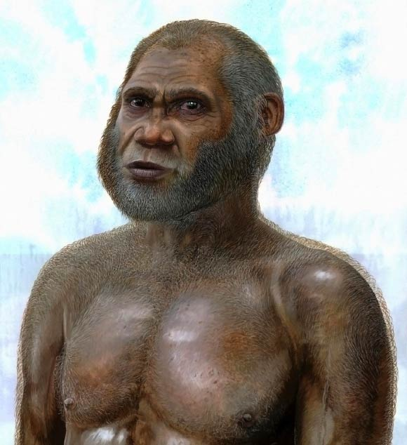 image Maludong Homo