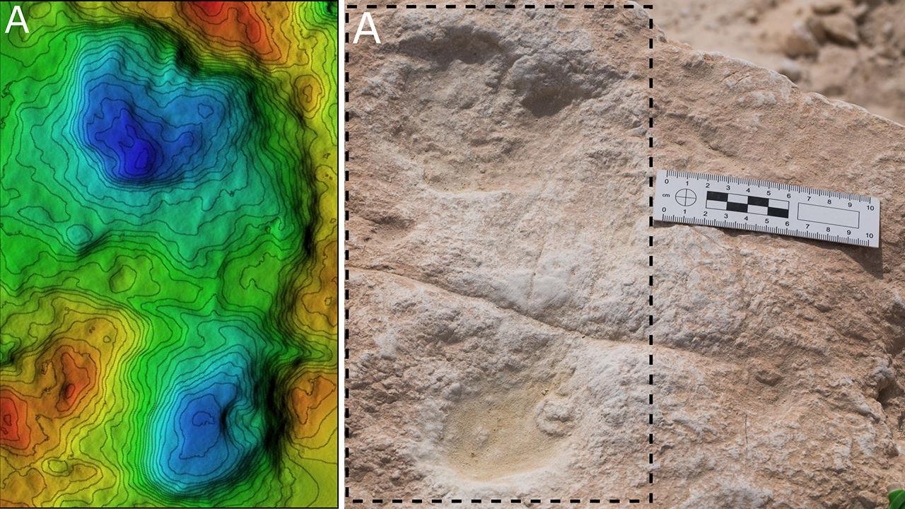 Fig Footprints x
