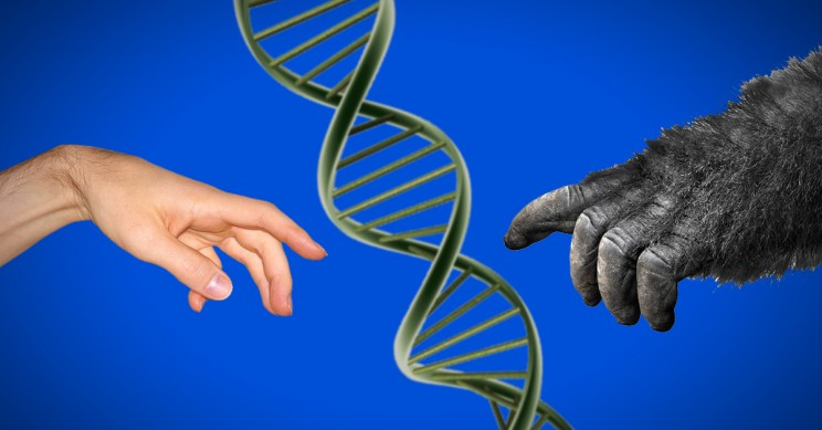 evolutionmain resize md