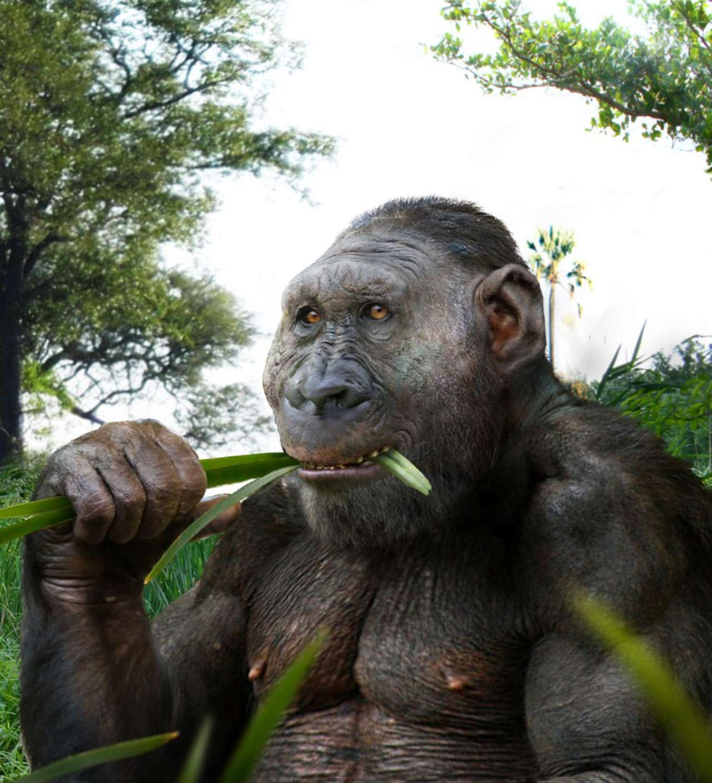 image e Paranthropus boisei