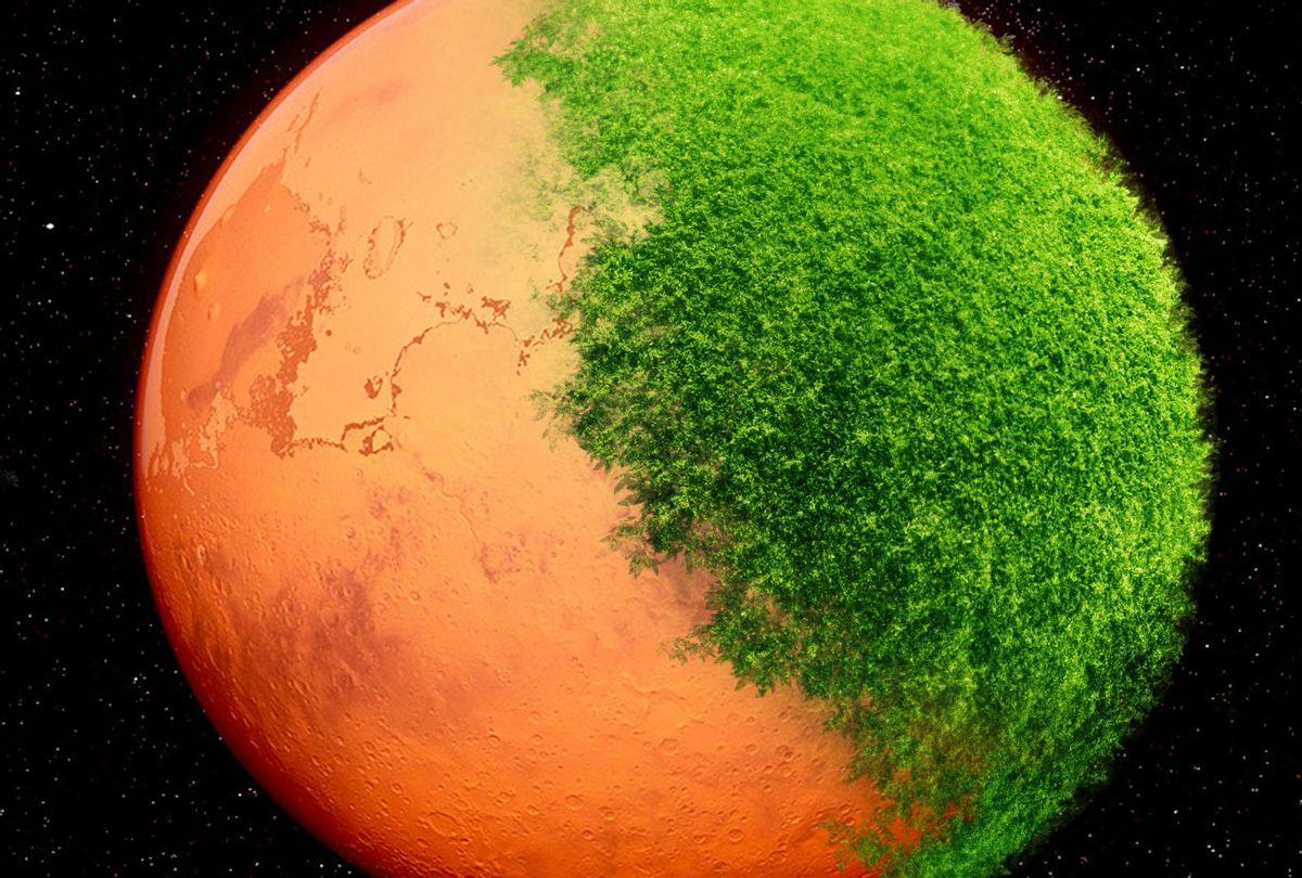 life on mars growing