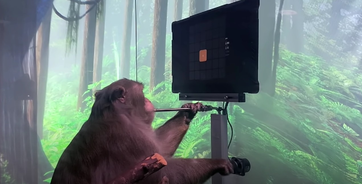 elon musks neuralink shows video of a monkey playing pong with its brain