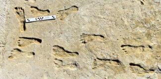 image e White Sands Footprints